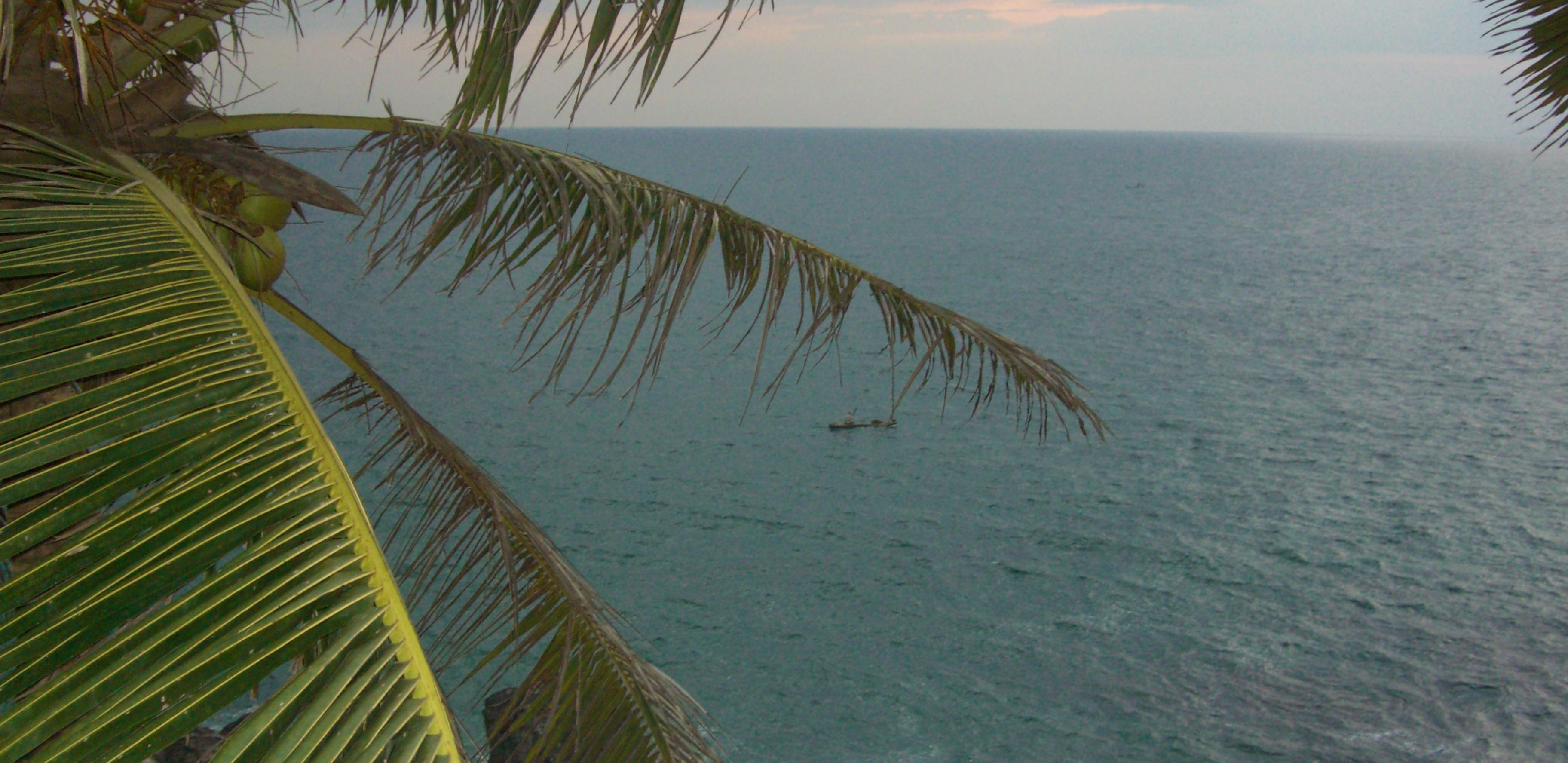 coconut palm-kerala